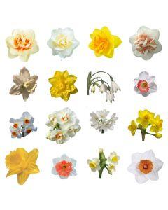 30 narcissen / 3 verschillende soorten